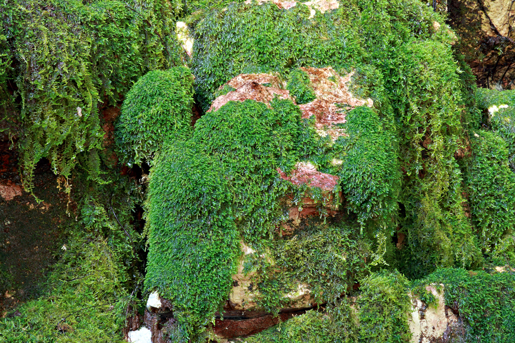 Moss-gardens-3