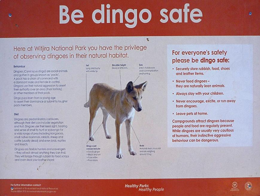 Dingo-Safe