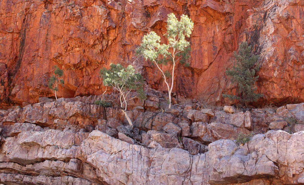 letgotravelaustralia.files.wordpress.com_2013_02_ormiston-gorge-cliff-and-trees.jpg