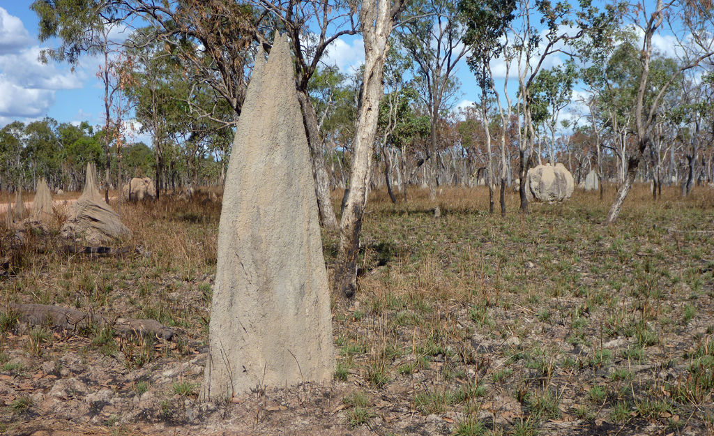 magnetic-termite-mounds